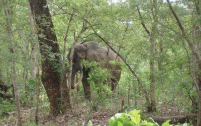 Olifanten, krokodillen, motoren en Burkina